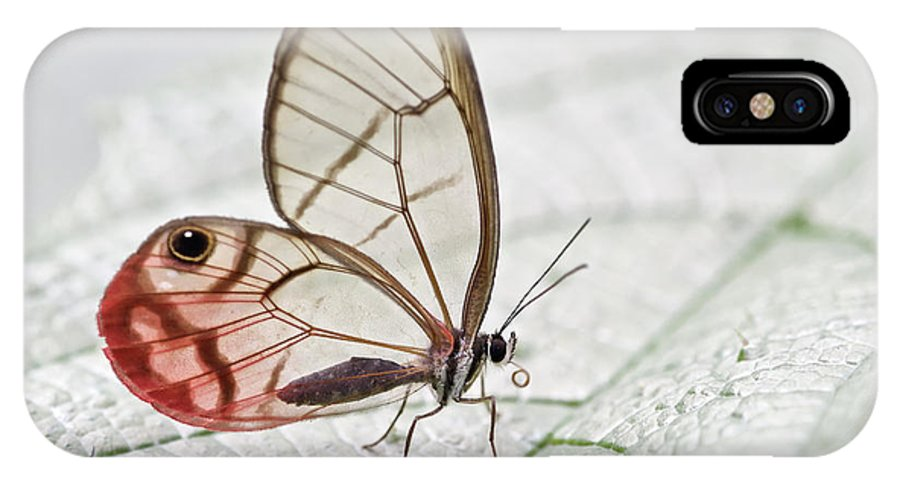 Fn IPhone X Case featuring the photograph Pink-tipped Clearwing Satyr Cithaerias by James Christensen
