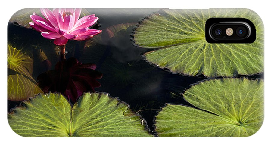 Water Llilies IPhone X Case featuring the photograph Pink Water Lily I by Heiko Koehrer-Wagner