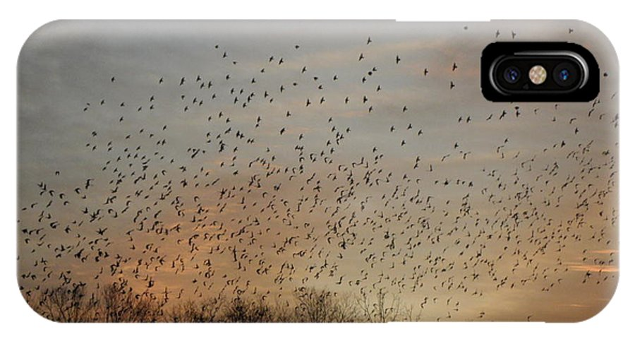 Black Birds IPhone X Case featuring the photograph Poetic Swarms by Kim Galluzzo Wozniak