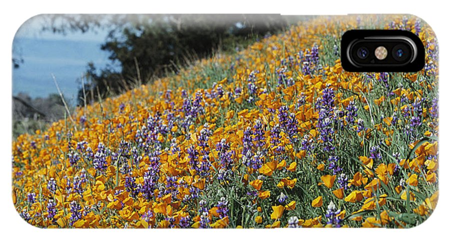 North America IPhone X / XS Case featuring the photograph Poppies And Lupine Flowers Blanket by Marc Moritsch