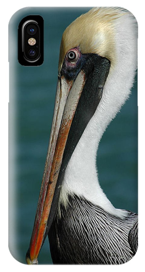 Pelican IPhone X Case featuring the photograph Posing For The Tourists by Vivian Christopher