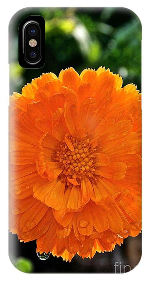 Outdoors IPhone X Case featuring the photograph Pot Marigold by Susan Herber