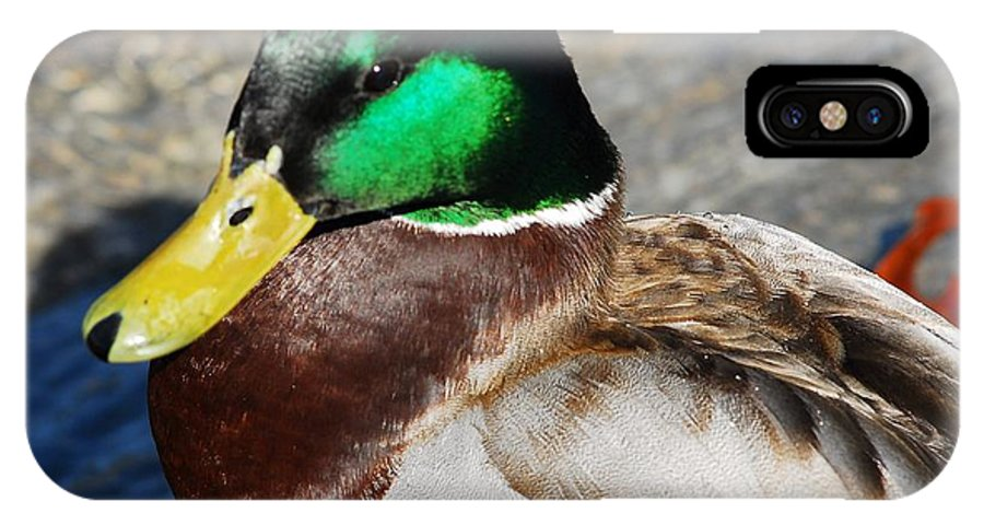 Duck IPhone X Case featuring the photograph Pretty Boy by Don Mann