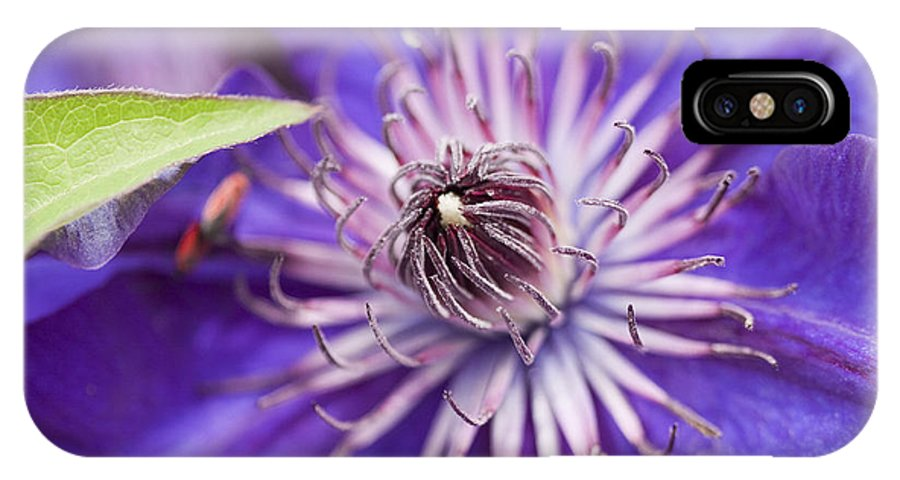 Clematis IPhone X Case featuring the photograph Pretty Purple Clematis by Kathy Clark