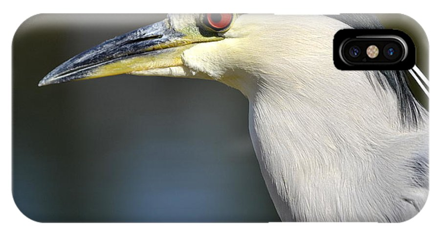 Black Crowned Night Heron IPhone X Case featuring the photograph Princely by Fraida Gutovich