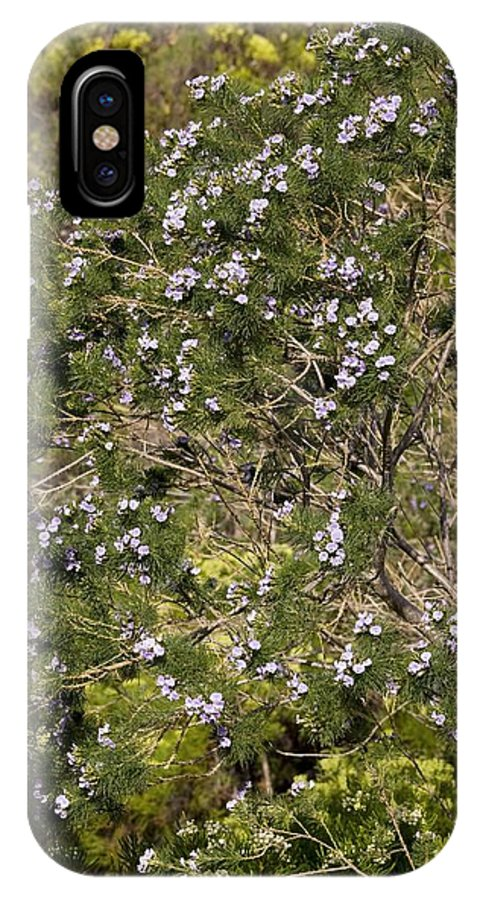 Psoralea Pinnata IPhone X Case featuring the photograph Psoralea Pinnata by Bob Gibbons