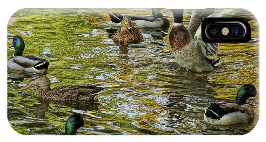 Boston IPhone X Case featuring the photograph Ducks Unlimited 02 by Jeff Stallard