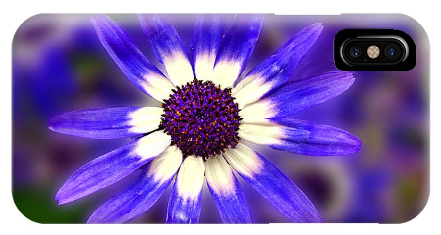Nature IPhone X Case featuring the digital art Purple Daisy Photoart by Debbie Portwood