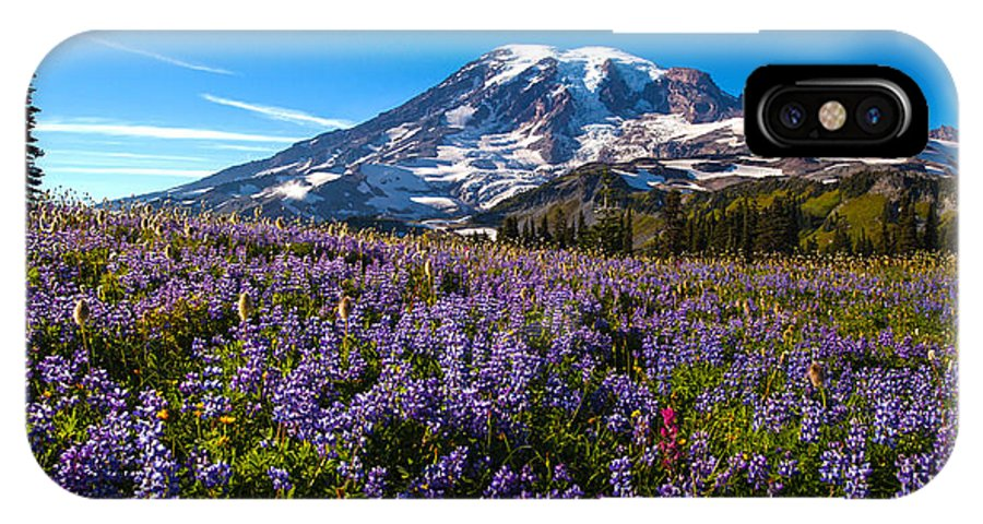 Rainier IPhone X Case featuring the photograph Purple Fields Forever by Mike Reid