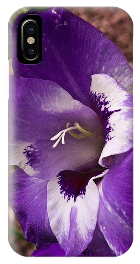 Gladiolus IPhone X Case featuring the photograph Purple Gladolia by Douglas Barnett