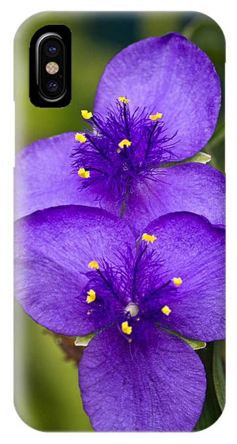 Spiderwort IPhone X Case featuring the photograph Purple Spiderwort 1 by Douglas Barnett