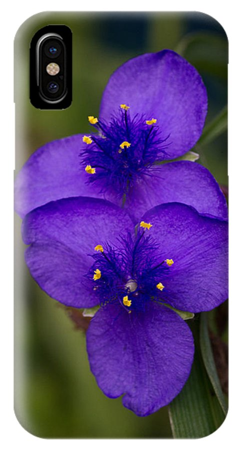 IPhone X Case featuring the photograph Purple Spiderwort 3 by Douglas Barnett
