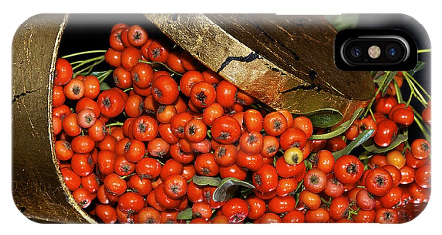 Berries IPhone X Case featuring the photograph Pyracantha Berries by Phyllis Denton