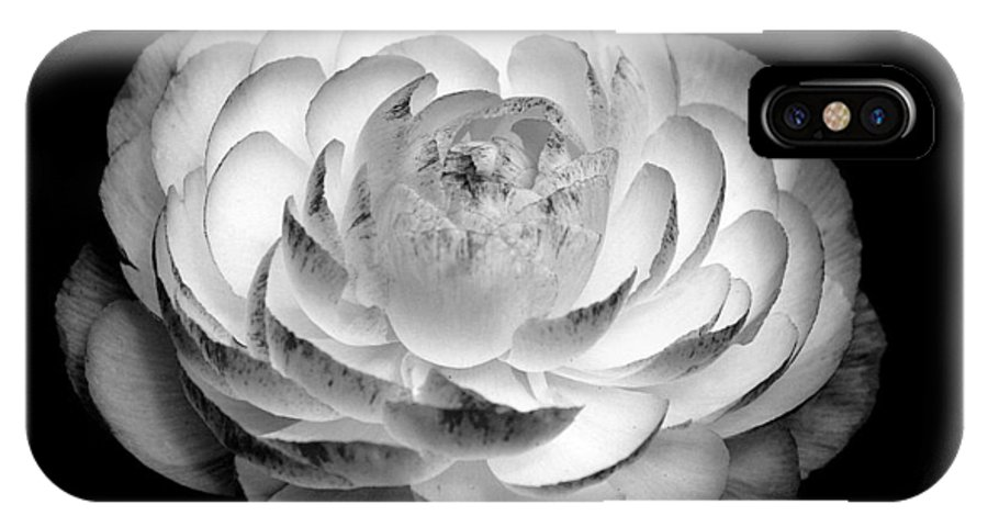 White Flower IPhone X Case featuring the photograph Radiance by Rosanne Jordan