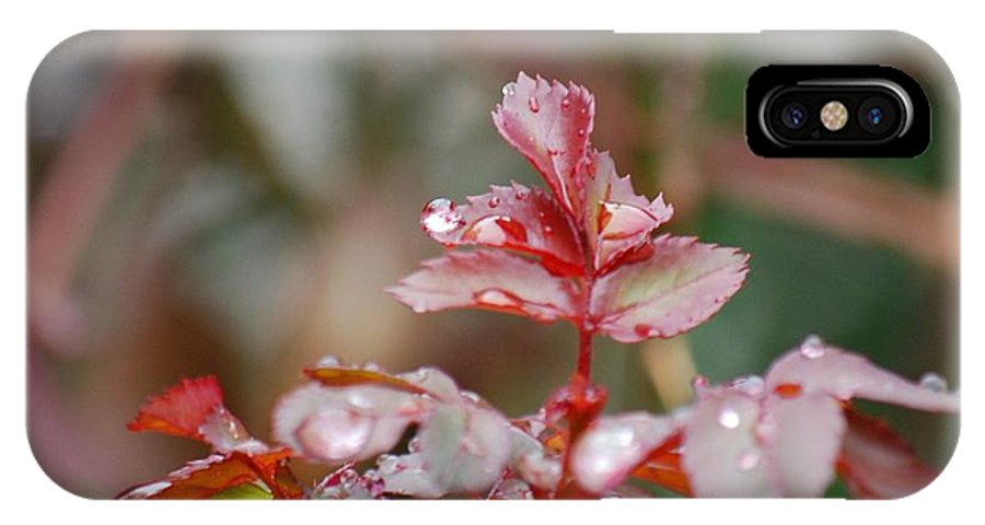Water Drops IPhone X Case featuring the photograph Rain Drops On A Plant by Ruth Yvonne Ash