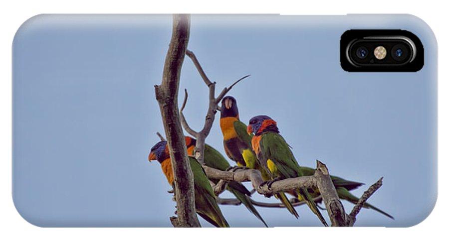 Rainbow Lorikeets IPhone X Case featuring the photograph Rainbow Lorikeets by Douglas Barnard