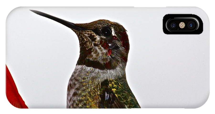 Birds IPhone X / XS Case featuring the photograph Rainy Day Guest by Diana Hatcher