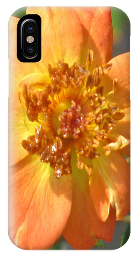 Rambling Rose IPhone X Case featuring the photograph Rambling Rose by Debra   Vatalaro
