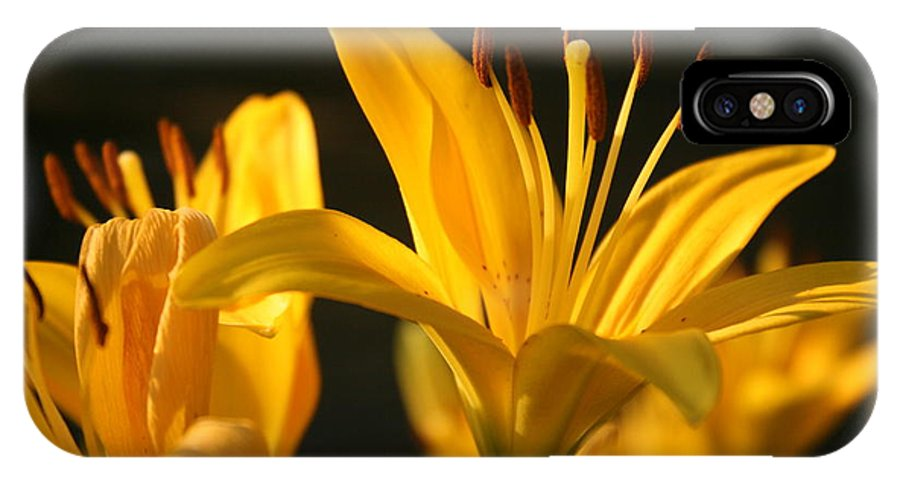 Yellow IPhone X Case featuring the photograph Reaching For The Sun by Christopher Hignite