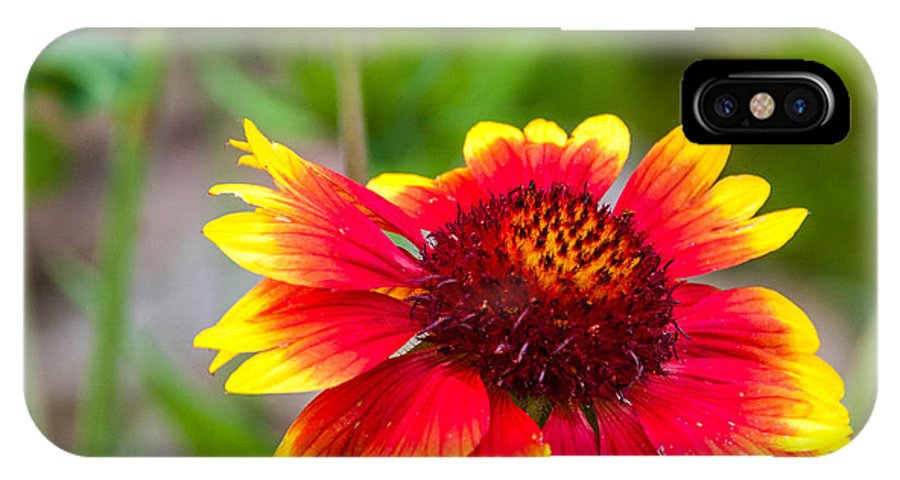 Flowers IPhone X Case featuring the photograph Reaching by Guy Whiteley