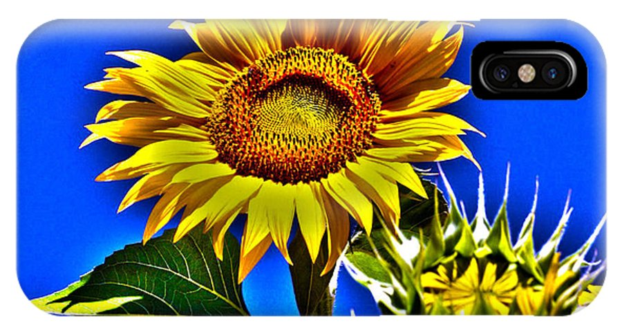 Sunflower IPhone X Case featuring the photograph Ready For My Close Up by Erin Rosenblum
