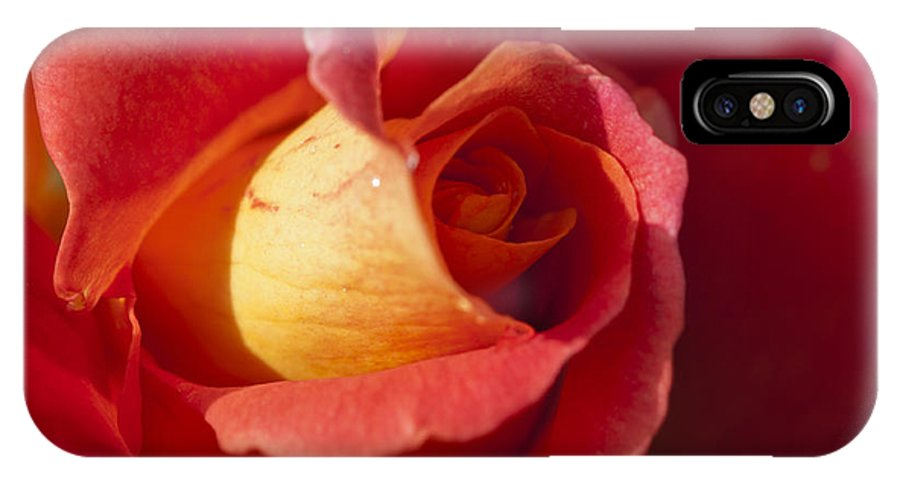 Red And Orange Rose IPhone X Case featuring the photograph Red And Orange 2 by Steve Purnell