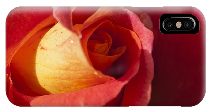 Red And Orange Rose IPhone X Case featuring the photograph Red And Orange by Steve Purnell