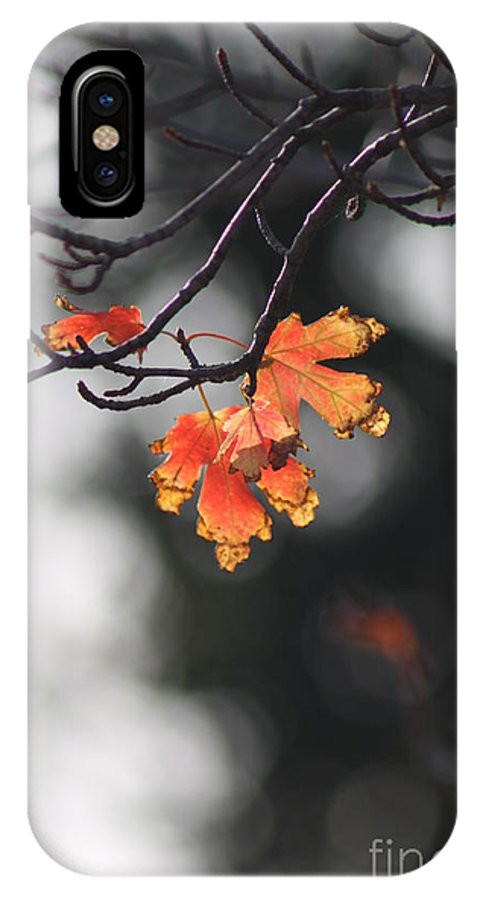Fall IPhone X Case featuring the photograph Red And Yellow Fall Leave's Closeup by Robert D Brozek