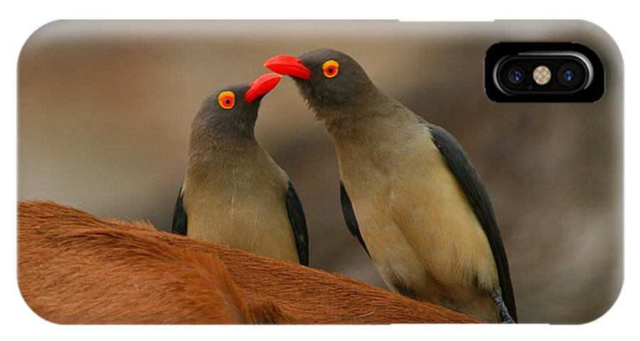 Oxpecker IPhone X Case featuring the photograph Red-billed Oxpeckers by Bruce J Robinson