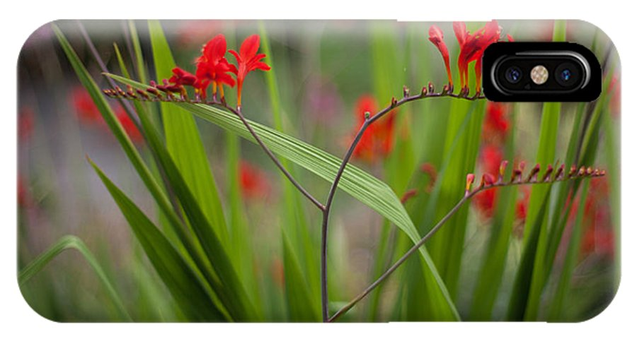 Flower IPhone X / XS Case featuring the photograph Red Blade Symmetry by Mike Reid