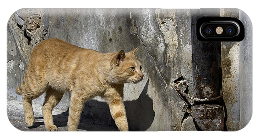Cat IPhone X Case featuring the photograph Red Cat In Burano by Raffaella Lunelli