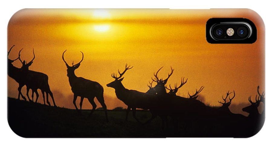 Red Deer IPhone X / XS Case featuring the photograph Red Deer Stags by David Aubrey