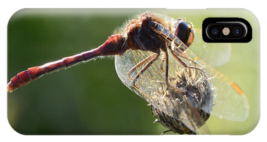 Red Dragonfly IPhone X Case featuring the photograph Red Dragonfly by Bob Christopher