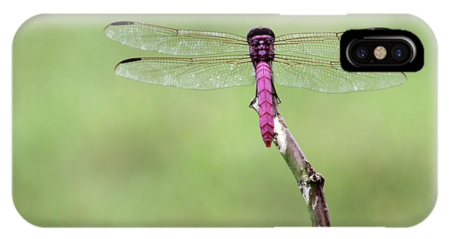 Dragonfly IPhone X Case featuring the photograph Red Dragonfly Dancer by Sabrina L Ryan