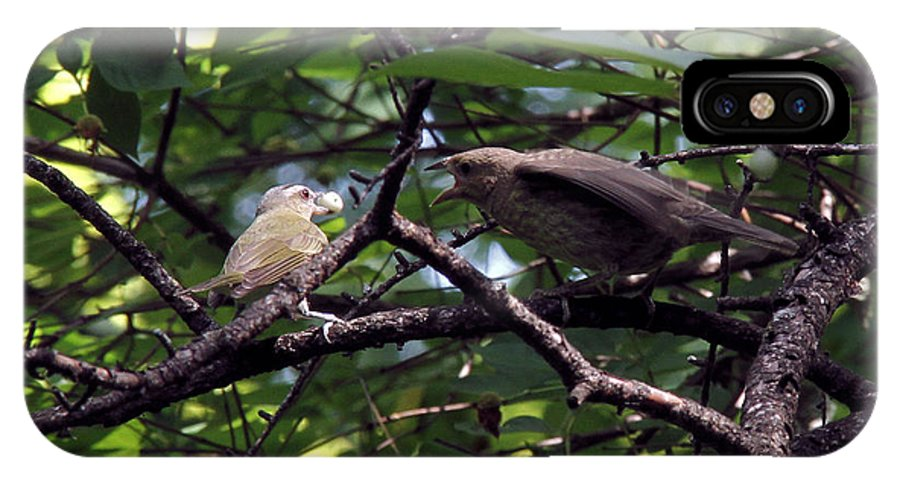 Red-eyed Vireo IPhone X Case featuring the photograph Red-eyed Vireo Feeding Cowbird Fledgling by Doris Potter