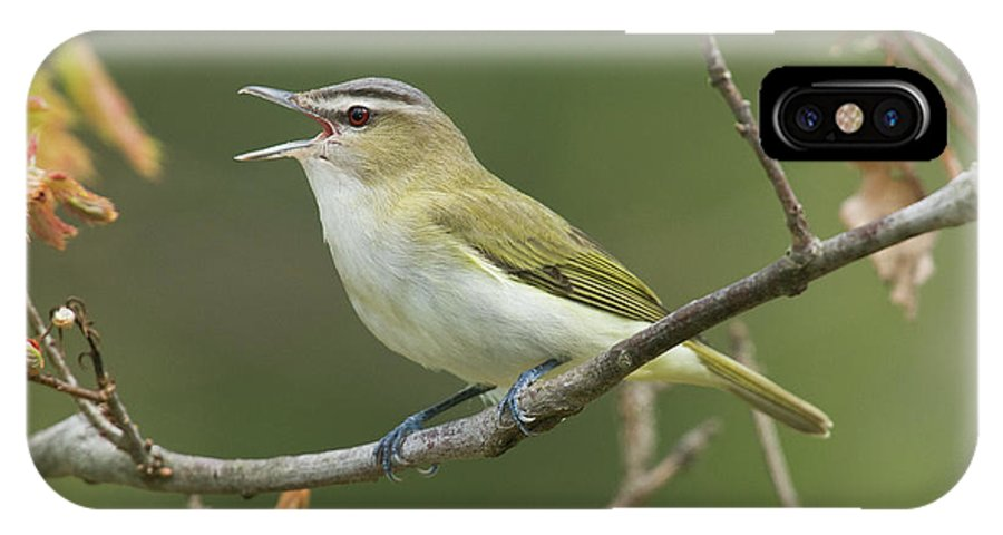 Mp IPhone X Case featuring the photograph Red-eyed Vireo Vireo Olivaceus Calling by Steve Gettle