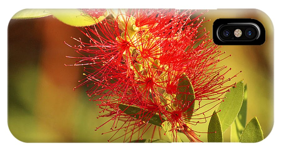 Roena King IPhone X Case featuring the photograph Red Flower by Roena King