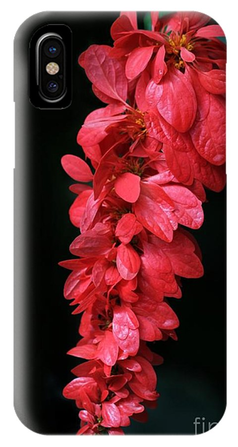 Holiday IPhone X Case featuring the photograph Red Holiday Greeting Card by Sabrina L Ryan