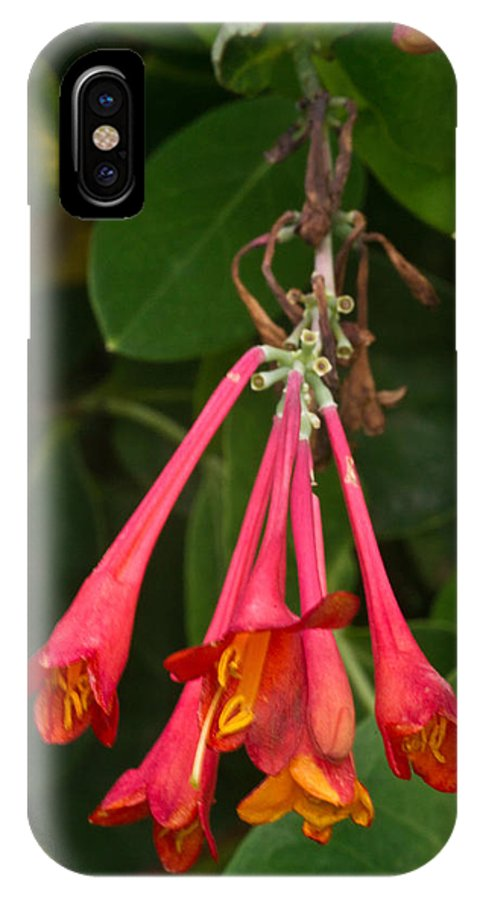 Honeysuckles IPhone X Case featuring the photograph Red Honeysuckle Blossoms 1 by Douglas Barnett