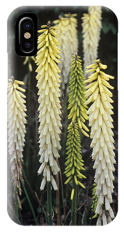 'little Maid' IPhone X / XS Case featuring the photograph Red Hot Poker (kniphofia 'little Maid') by Adrian Thomas
