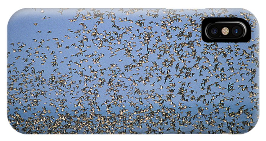 Fn IPhone X Case featuring the photograph Red Knot Calidris Canutus Flock Flying by Frits Van Daalen
