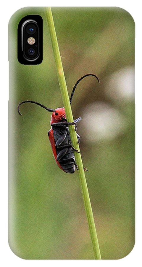 Red Milkweed Beetle IPhone X / XS Case featuring the photograph Red Milkweed Beetle by Doris Potter