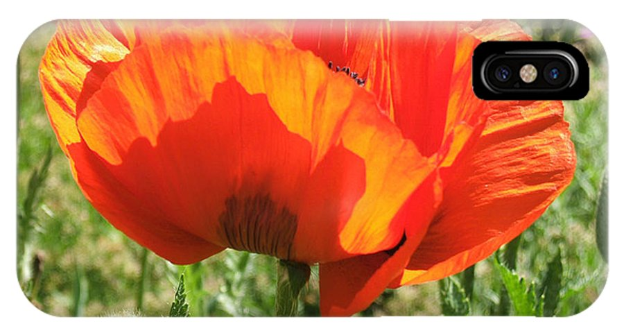 Re IPhone X Case featuring the photograph Red Poppy by Rosie Brown