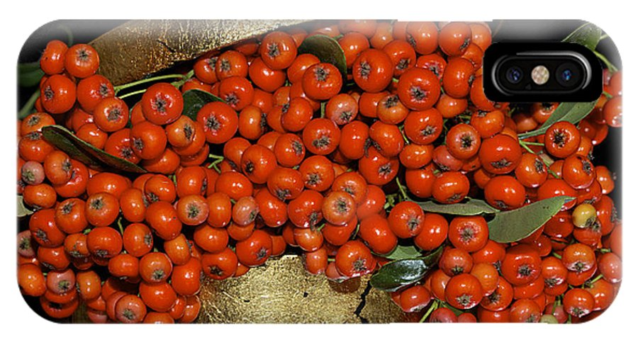 Pyracantha. Berries IPhone X Case featuring the photograph Red Pyracantha Berries by Phyllis Denton