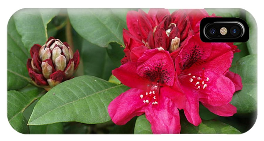 Flowers IPhone X Case featuring the photograph Red Rhododendron Blossom by Larry Krussel