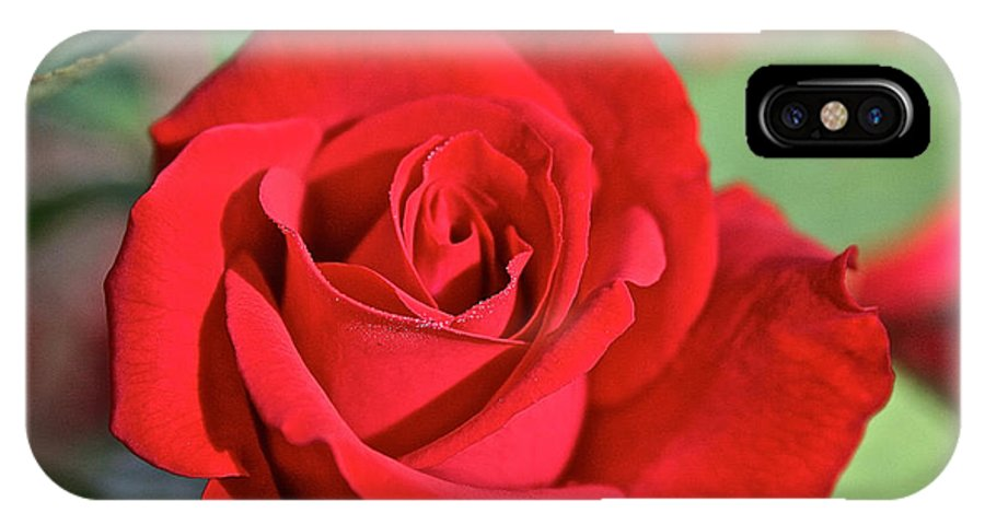 Plant IPhone X Case featuring the photograph Red Rose by Susan Herber