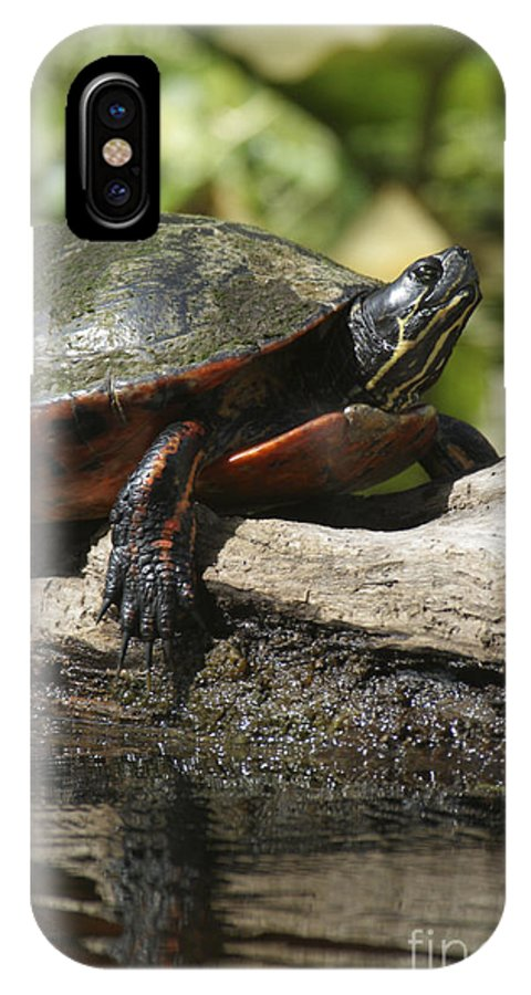 Cute IPhone X Case featuring the photograph Red Slider Sexy by Jack Norton