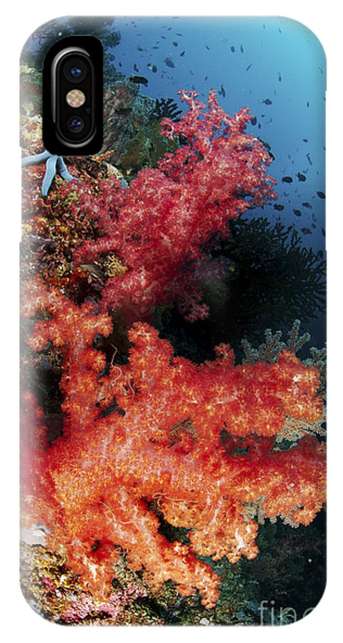Wall IPhone X Case featuring the photograph Red Soft Corals And Blue Leather Sea by Mathieu Meur
