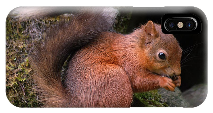 Red Squirrel IPhone X Case featuring the photograph Red Squirrel by Lynn Bolt