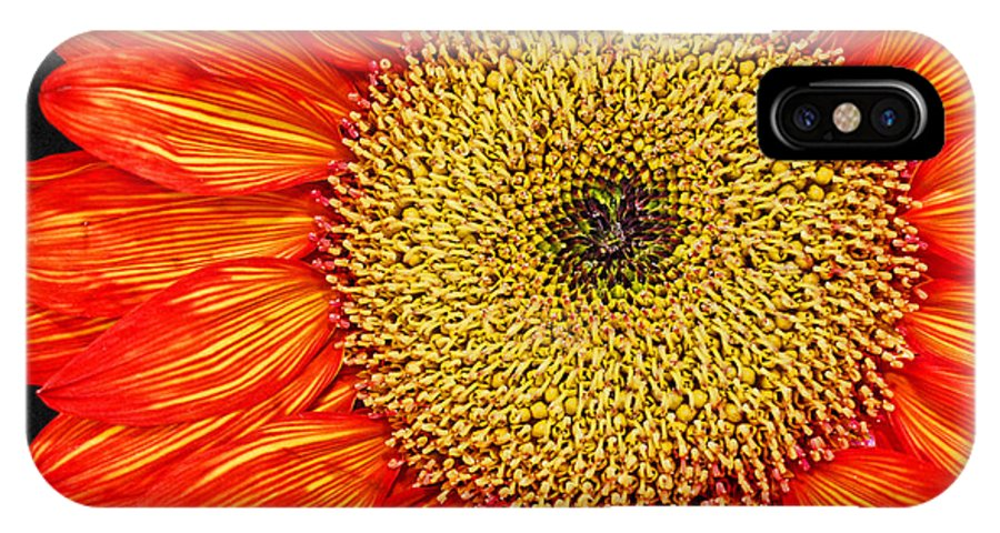 Red Sunflower IPhone X Case featuring the photograph Red Sunflower Iv by Saija Lehtonen